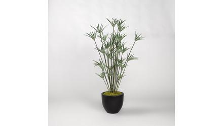 Cypress Grass Tree in Black Round Planter