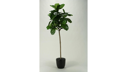 Fiddle Leaf Fig Tree in Black Round Planter - 7.5ft Tall