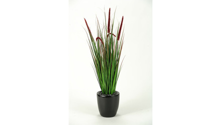 Onion Grass in Black Round Planter - 5.5ft Tall