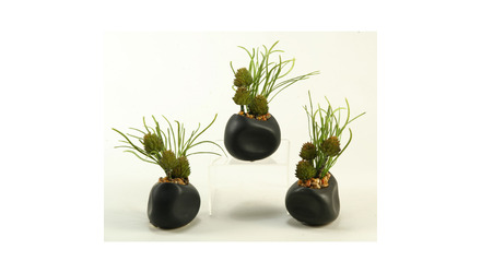 Spiney Protea and Grass in Black Ceramic Planter - Set of 3