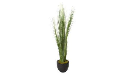 Onion Grass in Black Round Planter - 6.5ft Tall
