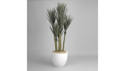 6 Yucca Tree Stems in White Round Planter