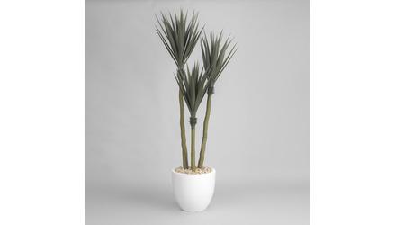 3 Yucca Tree Stems in White Round Planter