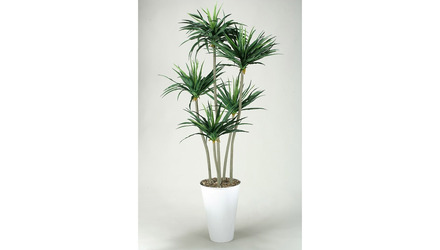 Bendable Yucca Trees in White Round Planter