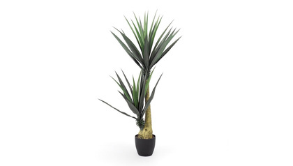 Aloe Tree in Black Round Planter