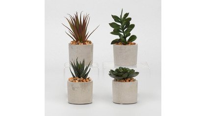 Assorted Succulents in Cement Cylinders - Set of 4