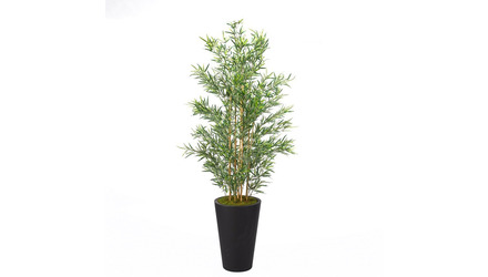 Bamboo in Black Round Planter - 7ft