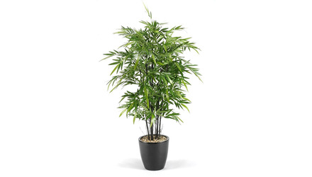 Bamboo Tree in Black Round Planter - 6ft